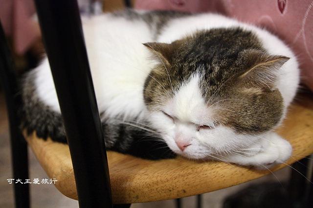 Cafe Dog&Cats_16