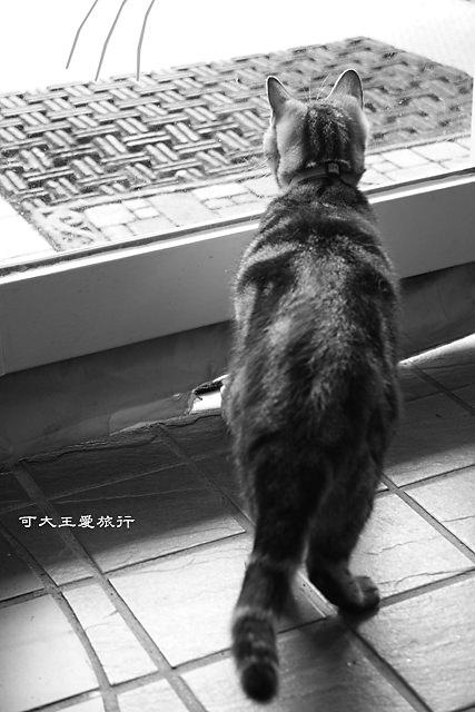 Cafe Dog&Cats_3