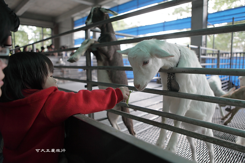 goatsfarm_22.jpg