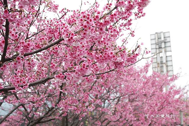 Formosa Cherry_44
