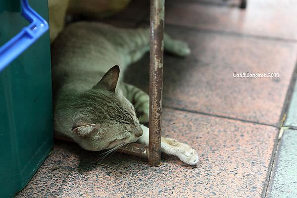 Cat@Bangkok_35.jpg
