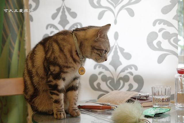 Cafe Dog&Cats_2