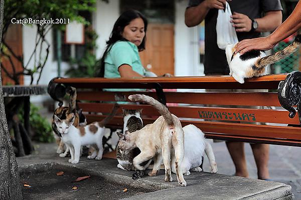 Cat@Bangkok_49.jpg
