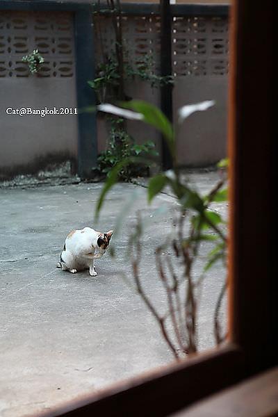 Cat@Bangkok_27.jpg