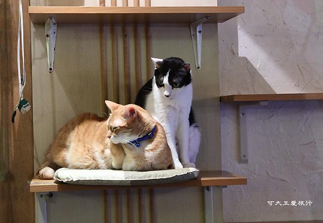 Cafe Dog&Cats_35