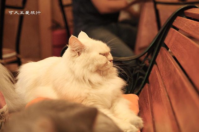 Cafe Dog&Cats_12