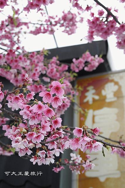 Formosa Cherry_33