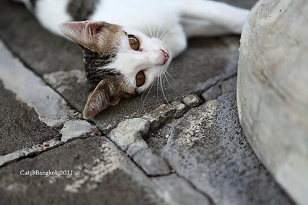 Cat@Bangkok_38.jpg
