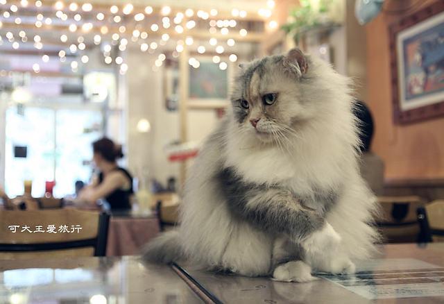 Cafe Dog&Cats_14