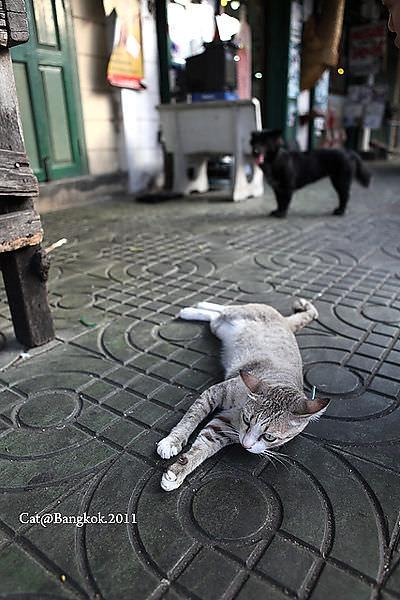 Cat@Bangkok_48.jpg