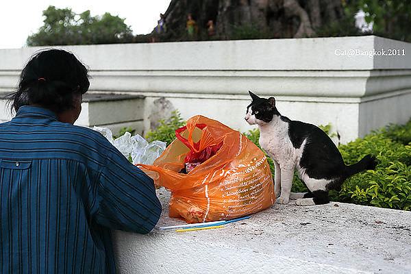 Cat@Bangkok_40.jpg