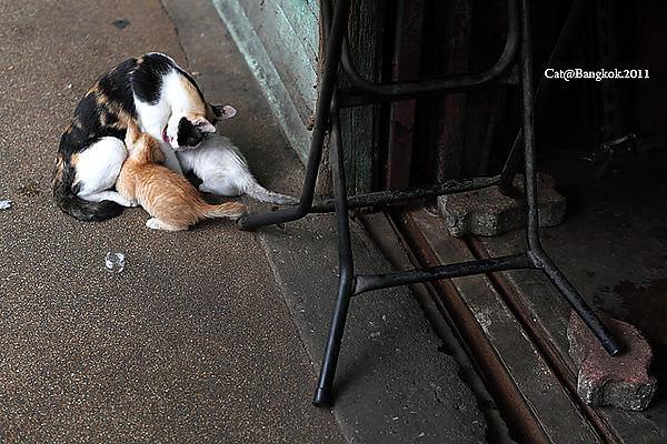 Cat@Bangkok_34.jpg