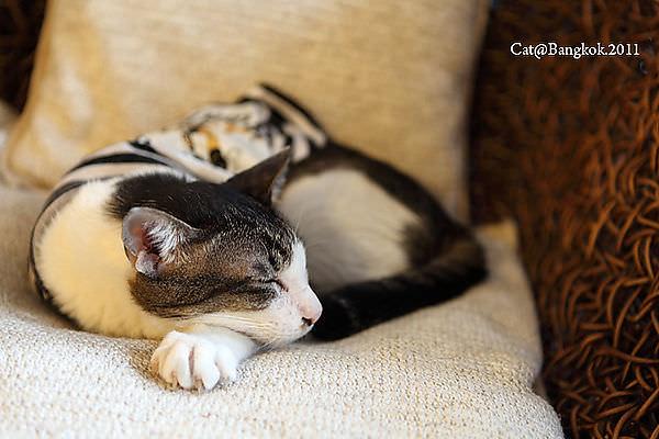 Cat@Bangkok_14.jpg