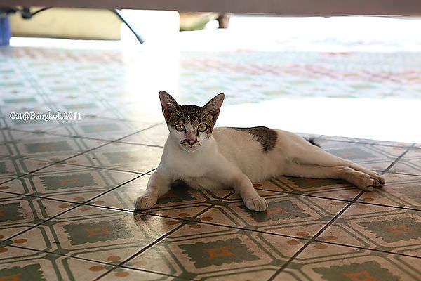 Cat@Bangkok_10.jpg