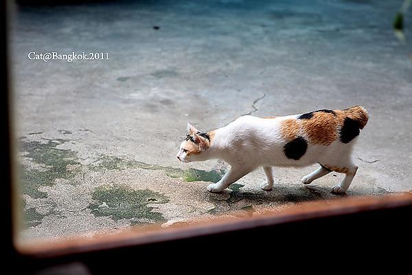 Cat@Bangkok_18.jpg