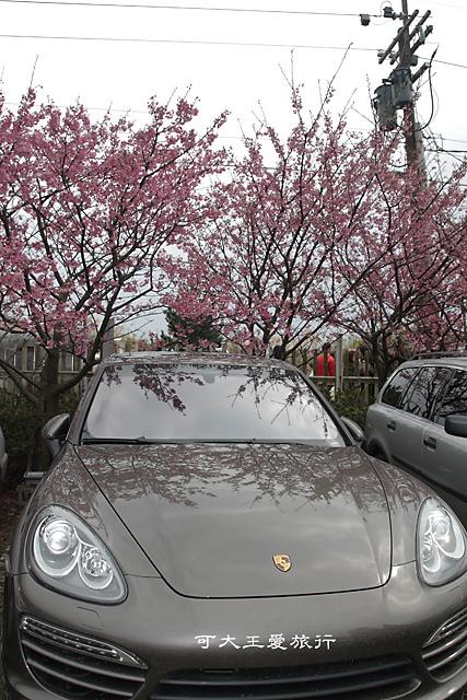 Formosa Cherry_41
