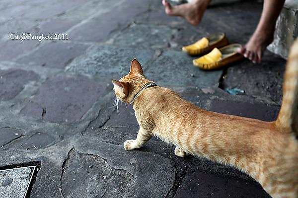 Cat@Bangkok_52.jpg
