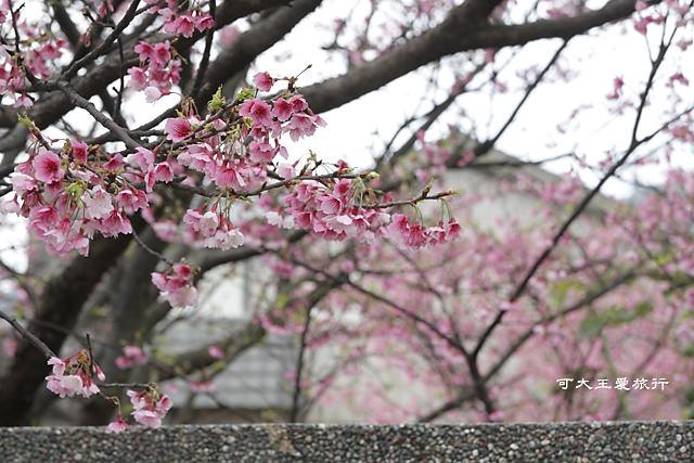 Formosa Cherry_48