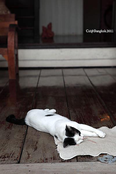 Cat@Bangkok_9.jpg